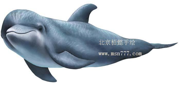 幼儿脸部海豚彩绘